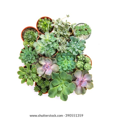 arrangement of the succulents or cactus in pot isolated on white background, overhead or top view - stock photo