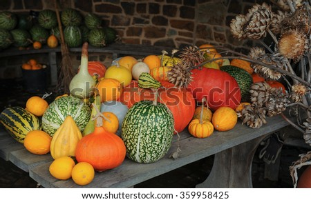 Arrangement of Winter Squash and Gourds on a Wooden Table in a Vegetable Garden in Devon, England, UK - stock photo