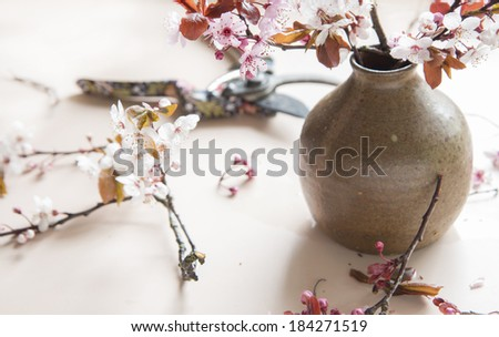 arranging cherry blossoms in a pottery vase on a pink background - stock photo