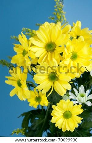 Array pretty yellow flowers isolated on stock photo 70099930 array of pretty yellow flowers isolated on blue mightylinksfo