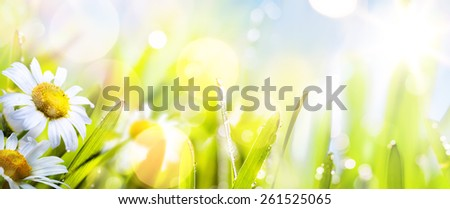 art abstract background spring summer flower in grass  - stock photo