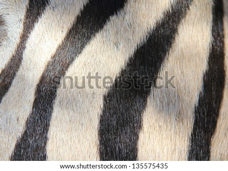 Art and the Zebra - Wildlife from Africa - Unique Patterns of Black and White