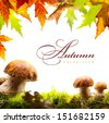 art autumn background with yellow leaves and autumn mushroom - stock photo
