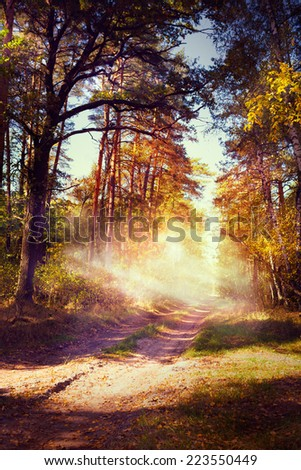 art beautiful autumn forest landscape with road in sunset  - stock photo