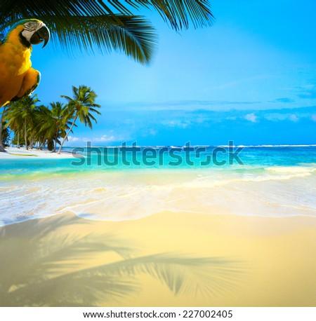 Art  beautiful Caribbean uninhabited tropical sea beach - stock photo