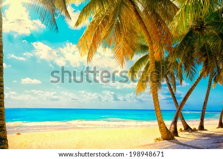 Art Beautiful sunset over the sea with a view at palms on the white beach on a Caribbean island - stock photo