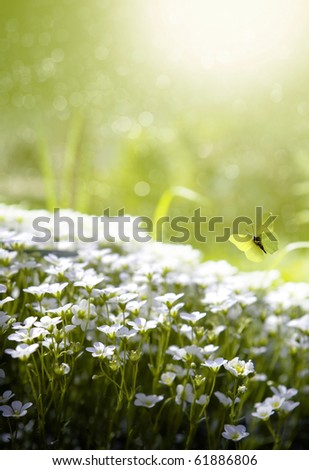 Art beauty spring - stock photo