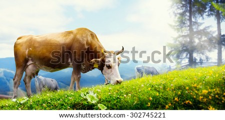 art cow grazing in a mountain meadow - stock photo