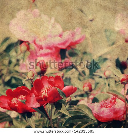 art floral vintage background with pink and red peonies - stock photo