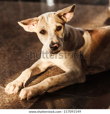 art of a roadside dog - stock photo