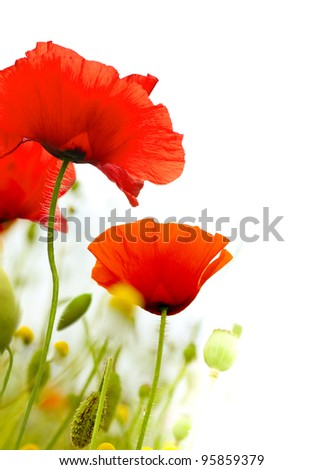 art poppies over a white background, green and red floral design, frame - stock photo