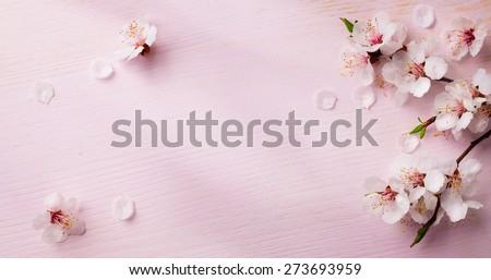 art  spring flowers frame  background - stock photo