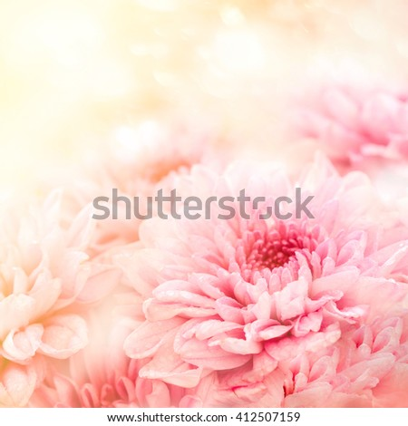 Art. Sweet color gerbera flower in bokeh texture soft blur for background with pastel color style.1:1