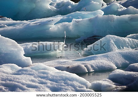 Artic Terns flying over melting glacier ice at Jokulsarlon lake caused by global warming - stock photo