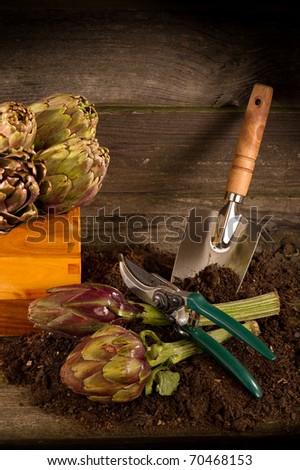 artichoke with garden tools - stock photo