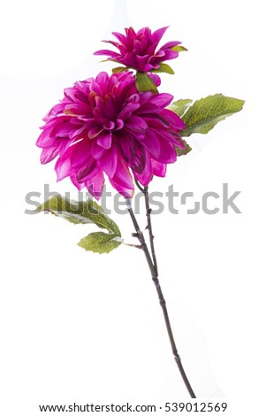 artificial dahlia on a white background