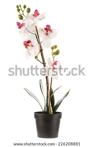 Artificial flower isolated on white background - stock photo