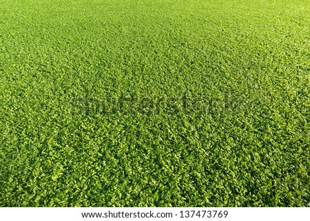 Artificial Grass Field in plastic material - stock photo