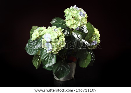 artificial hydrangea in a pot on a dark background
