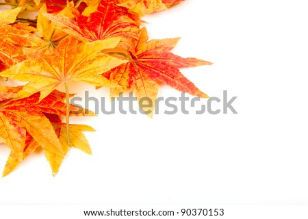 Artificial maple leafs isolated on a white