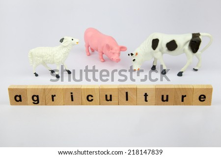 Artificial plastic cattle like pig, cow and sheep with the word agriculture on wooden blocks isolated on white background - stock photo