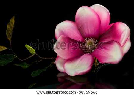 artificial tropical flower pink on a black background - stock photo