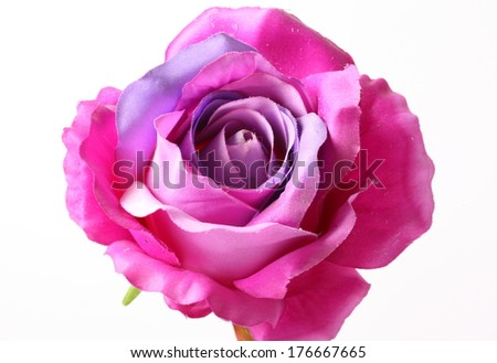 Artificial violet roses on white background