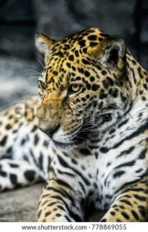 Artistic composition digital art, Leopard