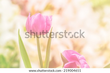 Artistic faded background of colourful spring tulips with a blur effect for a dreamy botanical backdrop in square format - stock photo