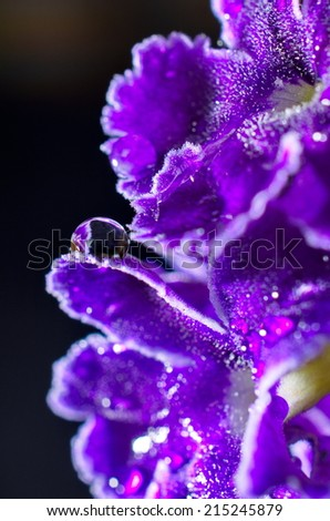 Artistic image of a purple flower with a water drop - stock photo