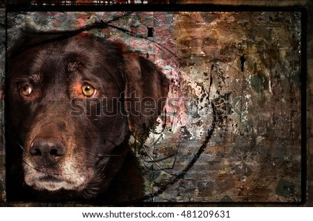 Artistic Photo Collage Portrait of a Sensitive Chocolate Labrador Dog