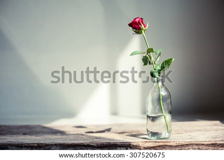 Artistic photo of beautiful rose in a vase on a wooden table. Natural light.  - stock photo