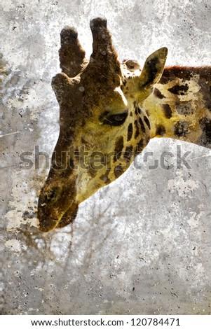 Artistic portrait with textured background, giraffe head - stock photo