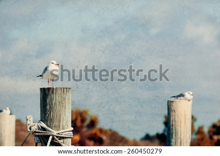 Artistic seagull picture with a grunge vintage style filter applied, great for nautical, ocean, old Florida, bird style decor - stock photo