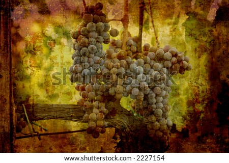 Artistic work of my own in retro style - Postcard from Italy. Ripe grapes. - stock photo