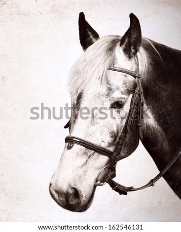 Artwork in retro style/ horse, portrait - stock photo
