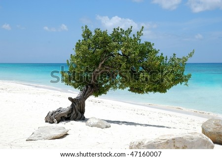 Aruba tree 2 - stock photo