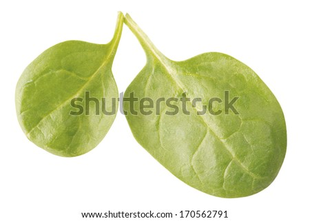 arugula salad leaves isolated