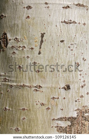 as birch tree in the background - stock photo