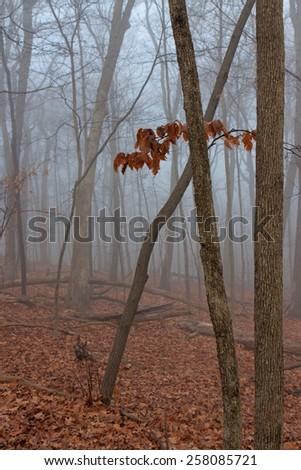 As solitary tree hangs onto its remaining leaves as an ominous fog rolls into the leaf covered forest. - stock photo