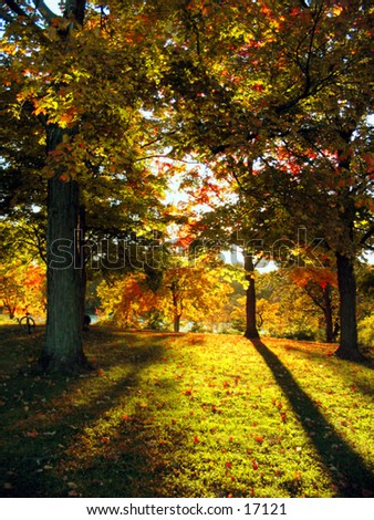 As the sun sets, shadows are cast by beautiful fall trees in a park.