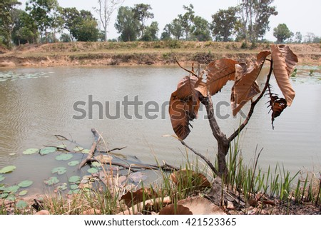 Ash and burned tree after fire near river. Deforest problem and fire for agriculture by farmer. Green house effect, global warming, and  elnino effect' problem. - stock photo