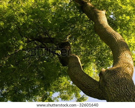 Ash tree - stock photo