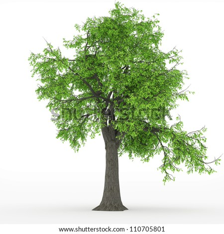 ash tree in 100Mpix - stock photo