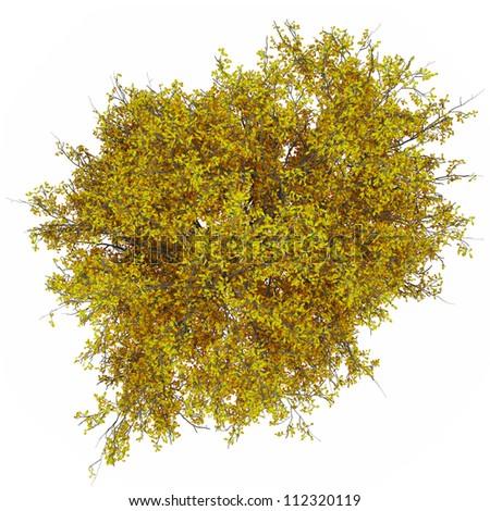ash tree top in 100Mpix - stock photo