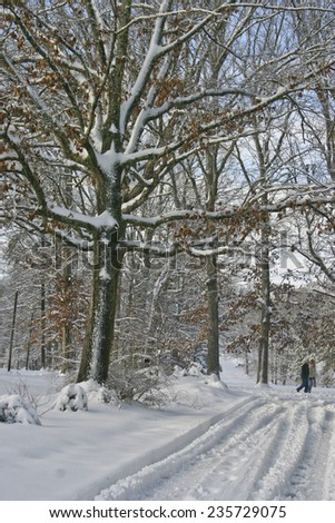 Asheville, North Carolina, USA - December 19, 2009:  A man and a woman take a cold walk together under wintry trees on a street covered in snow in winter on December 19, 2009 in Asheville, NC  - stock photo