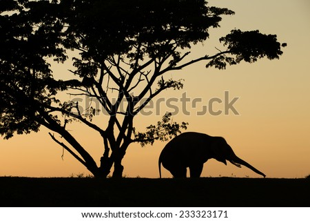 asia elephant in the forest at sunset - stock photo