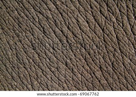asia elephant skin - stock photo