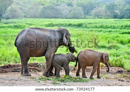 asia elephant with calf - stock photo