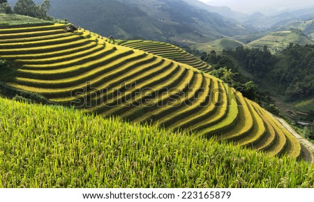Terrace farming stock images royalty free images for Terrace farming images